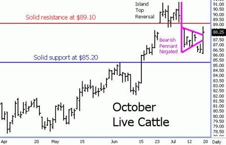 Live Cattle Bulls Fight Back